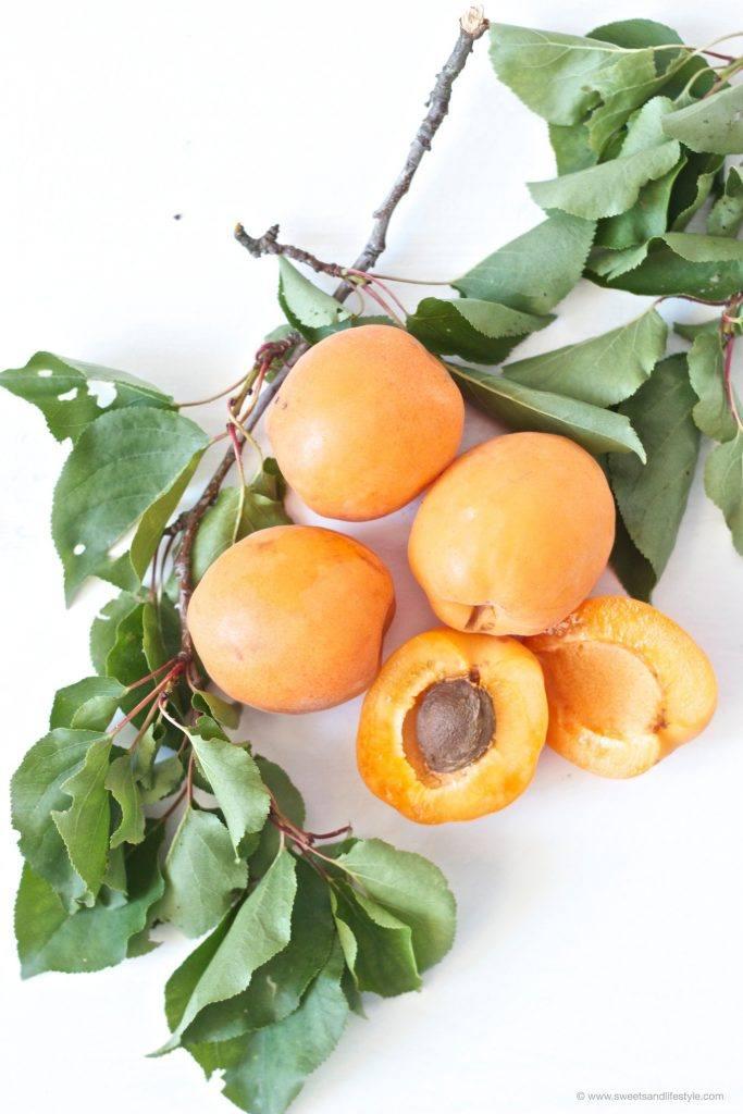Frische Marillen bzw. Aprikosen fuer selbst gemachten Marillennektar/Aprikosennektar von Sweets and Lifestyle