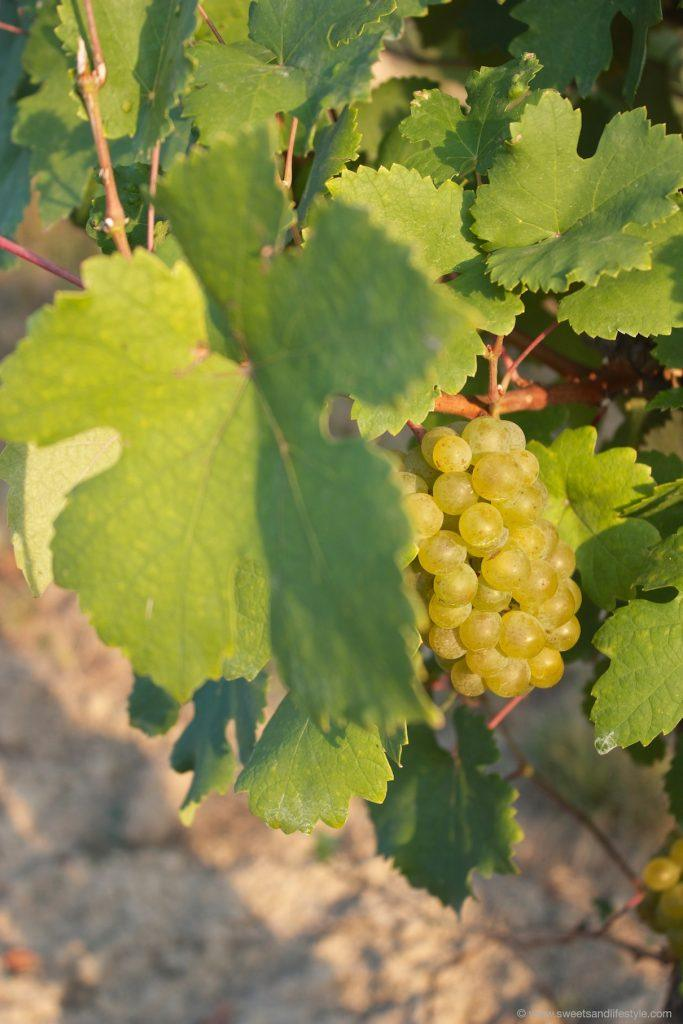 Reife Weintrauben passen gut zu frischem Nussbrot von Sweets and Lifestyle