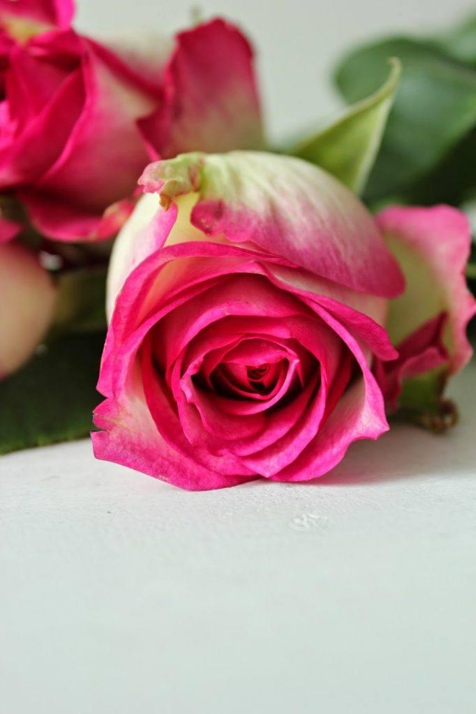 Selbst gemachter Sirup aus Rosenblüten bei Sweets and Lifestyle