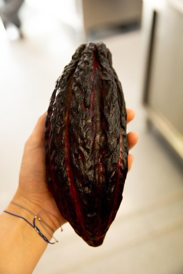 Eine ganze Kakaofrucht präsentiert bei Ritter Sport in Waldenbuch