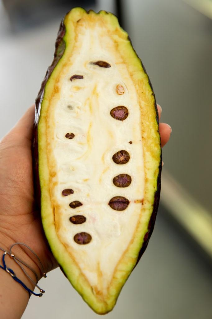 halbierte Kakaofrucht bei Ritter Sport in Waldenbuch