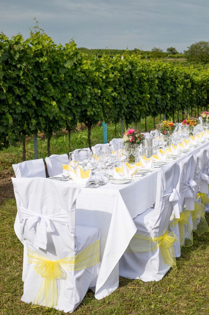 Tafeln unter freiem Himmel zwischen den Weinreben im Weinviertel