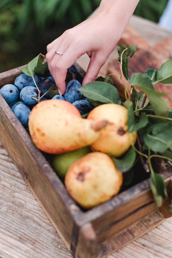 Frisches Obst zum Einkochen für das Fotoshooting zum Buch Einkochen Rezepte für selbstgemachte Köstlichkeiten im Glas von Verena Pelikan