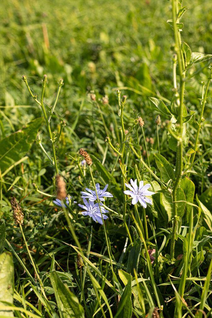 Nachhaltige Futterwiese beim Bio-Landwirt Georg Prantl in Neudorf bei Parndorf fotografiert von Verena Pelikan