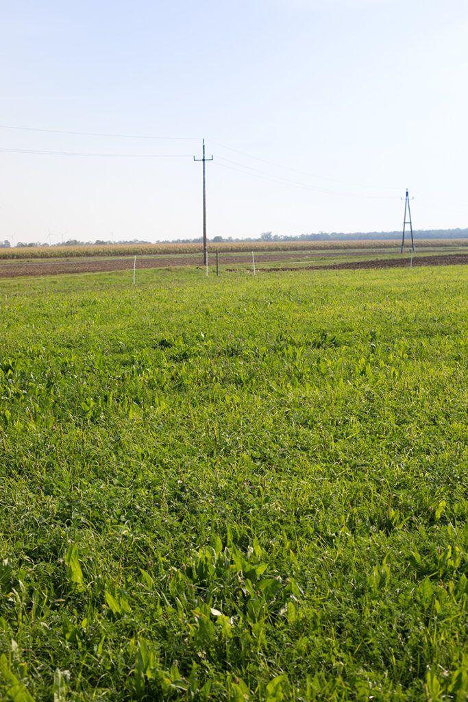 Saftige Wiese in biologischer Landwirtschaft im Burgenland auf der bald Rinder grasen fotografiert von Verena Pelikan