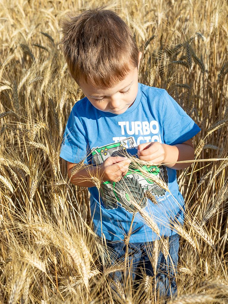 Junger Bub beim Betrachten einer Hartweizenaehre am Feld seiner Eltern