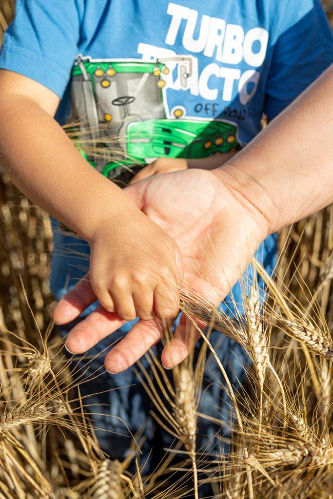 Haende von Mutter und Kind mit Aehren vom Hartweizen den die Familie fuer die Firma Recheis anbaut
